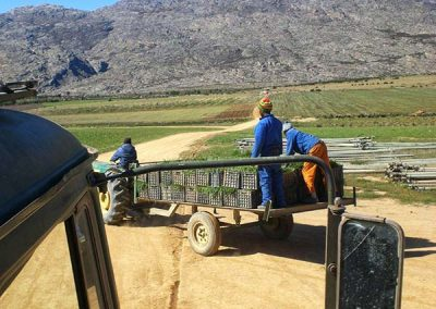 matroosberg-activity-farm-tours-08