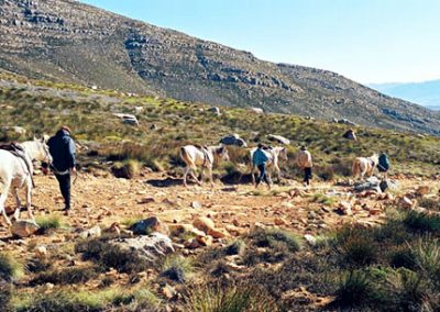 matroosberg-activity-horse-riding-03