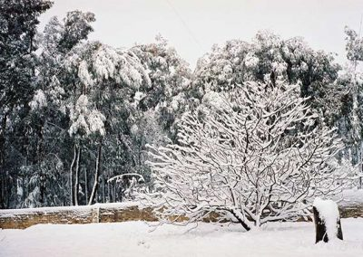 matroosberg-nature-snow-14