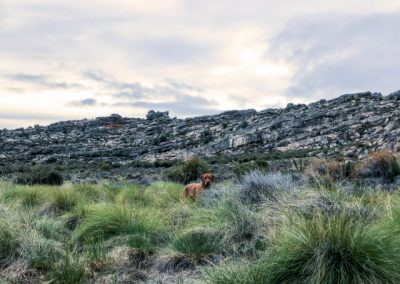matroosberg-accommodation-solitaire-05